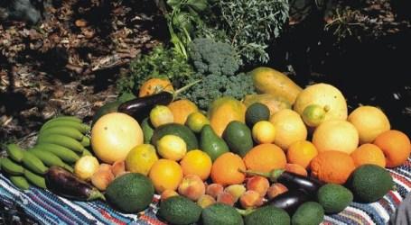 El Cabildo facilita a los agricultores de Mogán la compra de nuevos árboles frutales