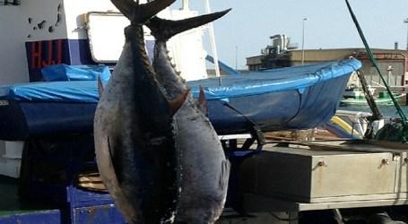 El Cabildo de Gran Canaria apoyará las reivindicaciones para la pesca del atún