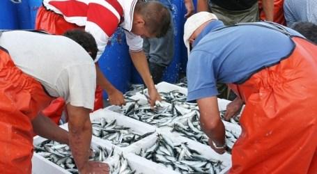 NC de Mogán rechaza que barcos marroquíes desembarquen pescado en La Luz