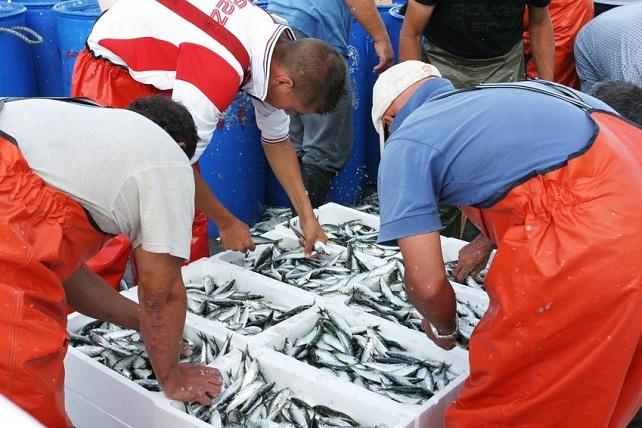 Desembarco de pescado fresco