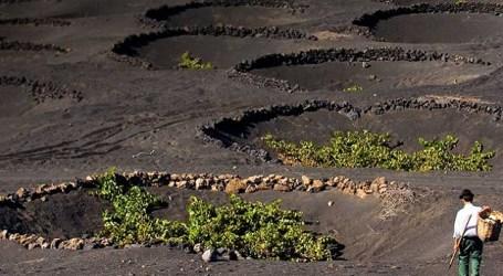 Las denominaciones de origen de Canarias: D.O. Vino Islas Canarias