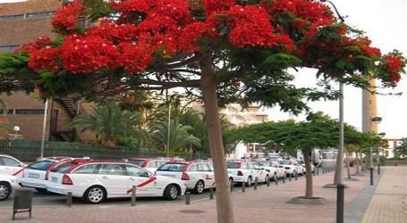 Maspalomas quiere coordinación del transporte en el ámbito turístico