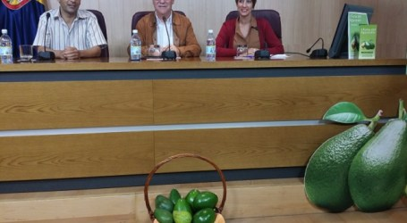 El Cabildo y Mogán apuestan por incluir el aguacate en la marca Gran Canaria Calidad