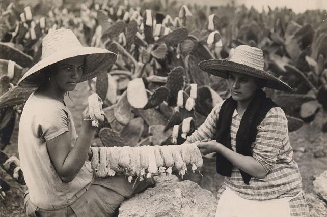 Fedac, mujeres recogiendo cochinilla en Santa Lucía
