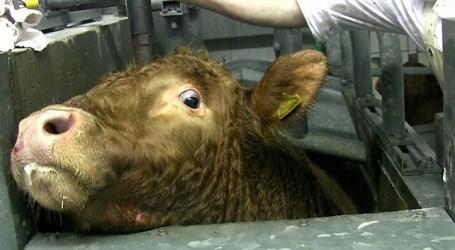 Mataderos de animales