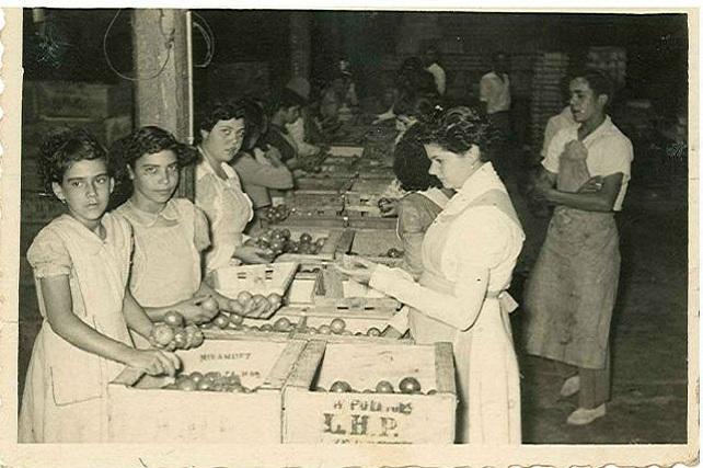 Trabajadoras del empaquetado de tomates en Gran Canaria