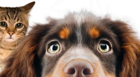 Animundo vuelve a Gran Canaria con más superficie, contenidos y el desfile de 40 perros del Albergue para adoptar