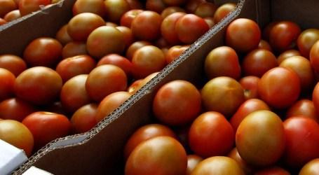 Las empaquetadoras de tomates cotizarán a la Seguridad Social por los 30 días del mes