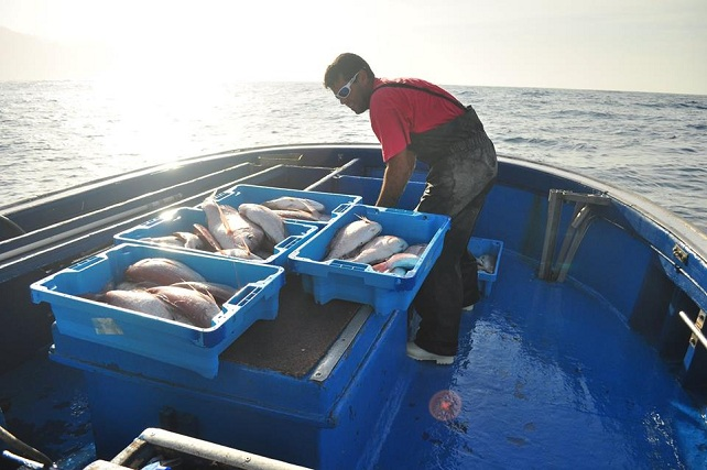 Sector pesquero en Mogán