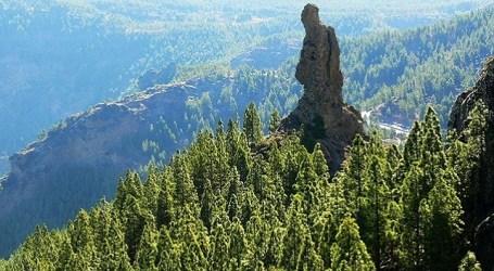 Gran Canaria en la buena senda (I)