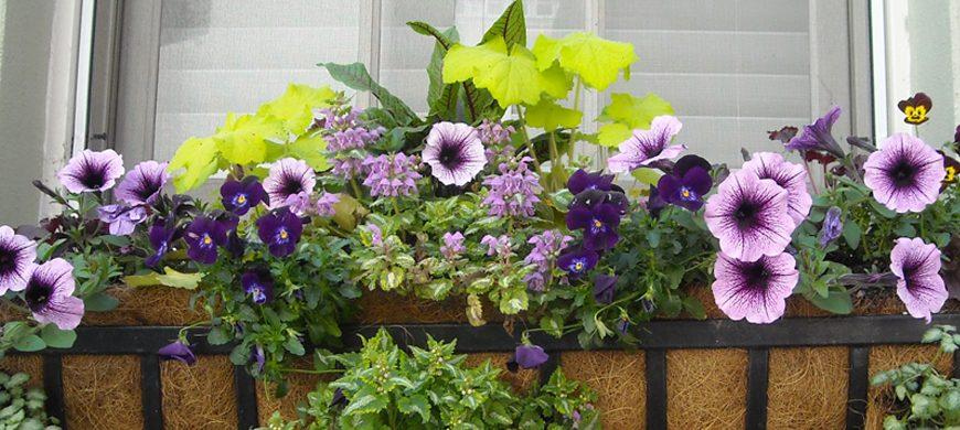 Tips Agar Taman Minimalis Rumah Anda Tampak Lebih Indah dan Segar