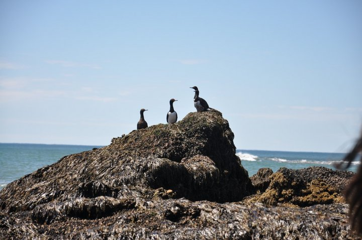 fauna costera