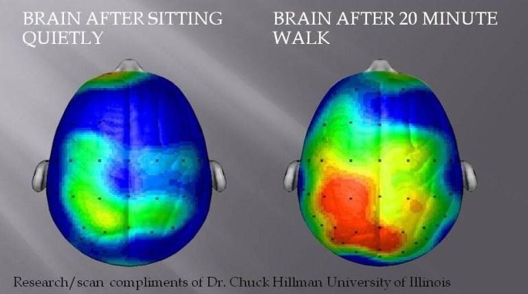El cerebro quieto vs. el cerecro después de 20 minutos de ejercicios