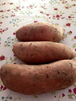 Batata doce – a primeira tentativa