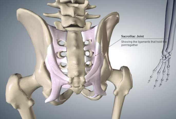 "Sacroiliac joint (""SIJ"") showing the main ligaments."
