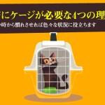 猫にケージが必要な4つの理由。幼い時から慣れさせれば色々な状況に役立ちます