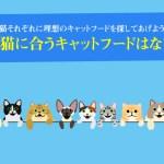 全ての猫に合うキャットフードはない理由!猫それぞれに理想のキャットフードを探してあげよう
