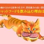キャットフードを飲み込む理由は?猫の歯からわかる食事の仕方や、消化能力の高い消化管