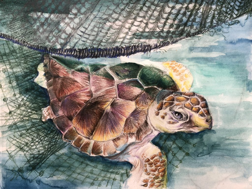 Saving Endangered Species Youth Art Contest