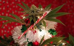 Support Local Cannabis Advocacy Groups this Holiday Season!