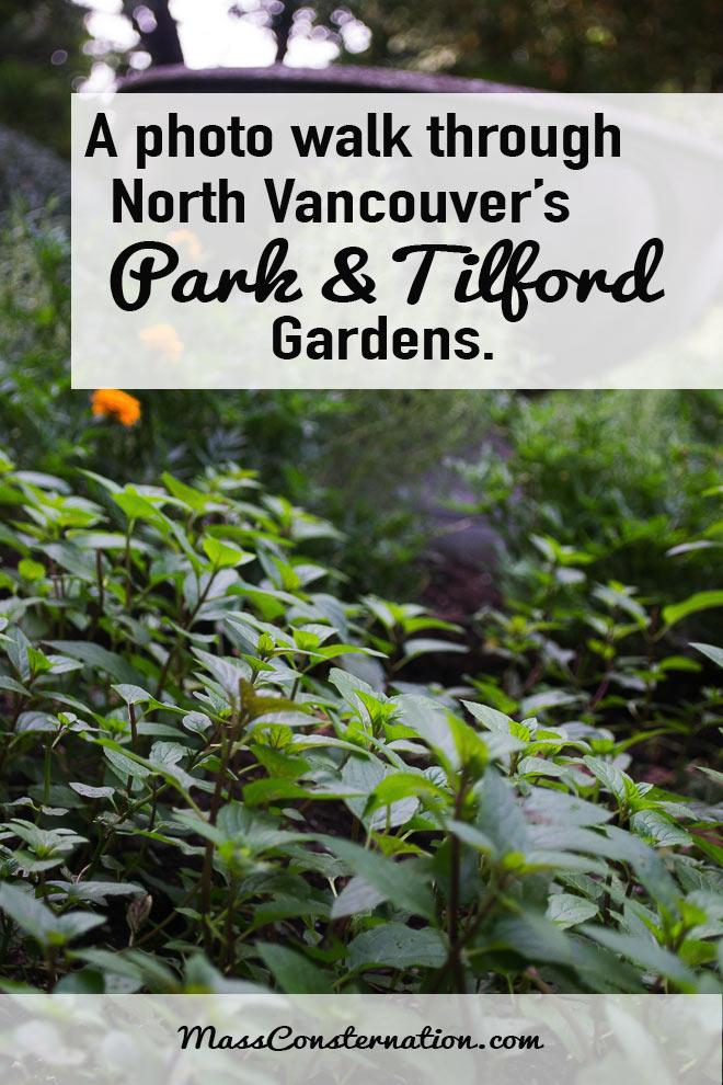 A pretty photo walk through the Park & Tilford Gardens in North Vancouver, Canada