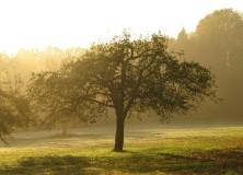 orchard-418888_1280-222×160