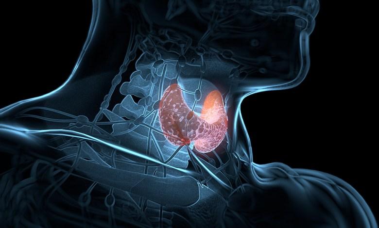 Thyroid gland inside human body. Glowing red. 3D illustration.