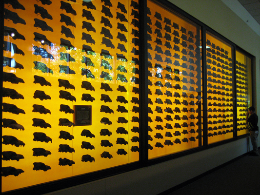 You could see all the individual variations in the skulls.