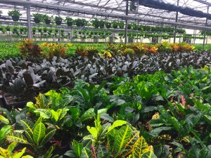 greenhouse-masson-farms-new-mexico
