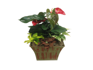 14-in-interior-garden-anthurium