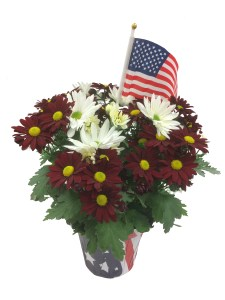 patriotic-mum-red-white-6.5-in-masson-farms-of-new-mexicio