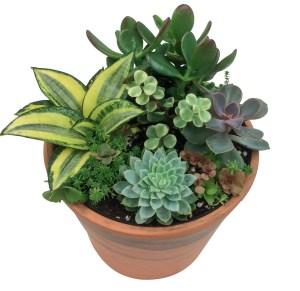 succulent-garden-assortment-masson-farms-of-new-mexico-wholesale