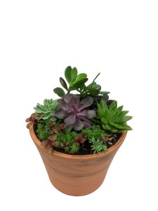succulent-garden-assortment-wholesale-masson-farms-of-new-mexico