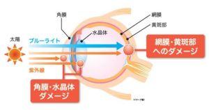網膜へのダメージ図(わかさ生活研究所抜粋)