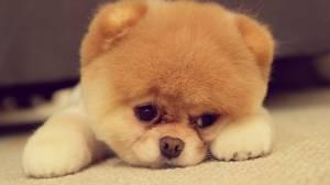 307235-dogs-cute-dog