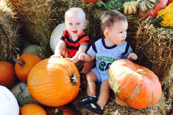 The only thing cuter than my grandson is my grandson enjoying a playdate in a pumpkin patch!!!