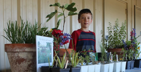 Eli Kubicek is a plant propagating 10 year old entreprunuer from Brenham, Tx