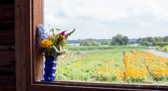 Lovely view from the Big Big Barn at Texas Specialty Cut Flowers in Blanco, Tx. Photo credit: Whitney Devin for Field to Vase Dinner Tour.