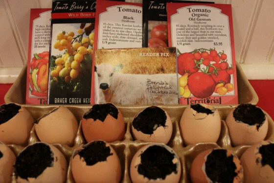 "This year I am growing tomato transplants in egg shells. The tomatoes I am trying this year are ""Old German"", ""Black Vernissage"", ""Black"", ""Barry's Crazy Cherry"" and a pass-a-long tomato we call ""Brenda's Delight""."