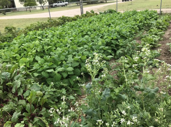 This is only half of John's amazing garden!