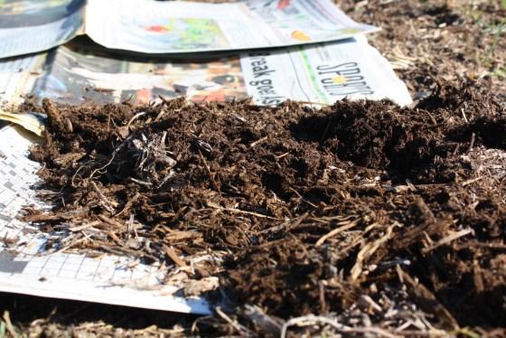 newspaper-mulch