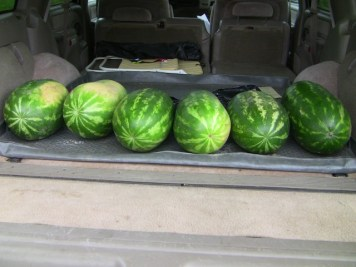 Watermelons donated by Brian Horton from Horton's Supermarket, Galax. Thanks Brian!