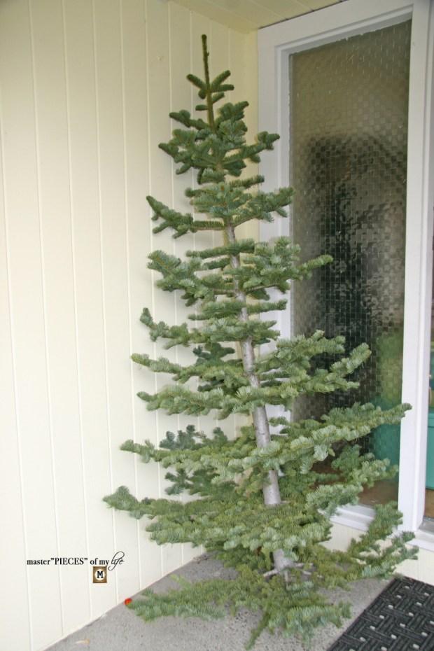 Christmas tree tradition9