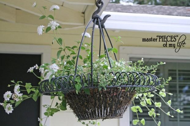 Container gardening 2020 8