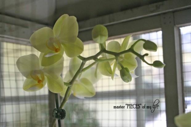 Orchids 101-1