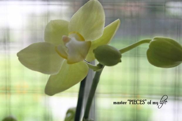 Orchids 101-4