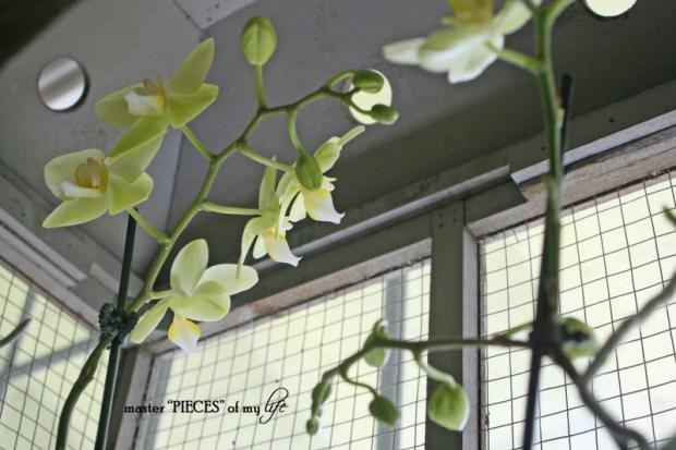 Orchids 101-7
