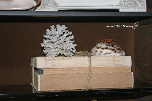 Secretary seashells 7