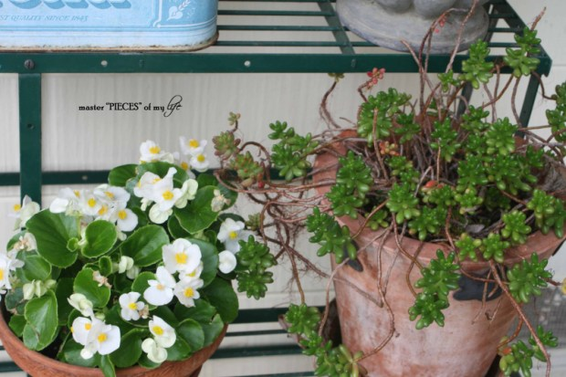 Container gardening 4