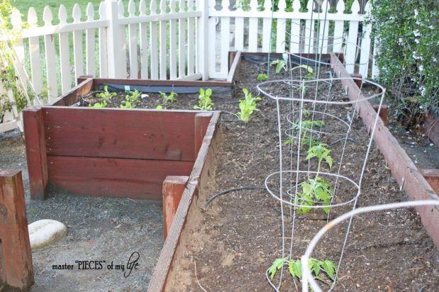 Veggie garden3